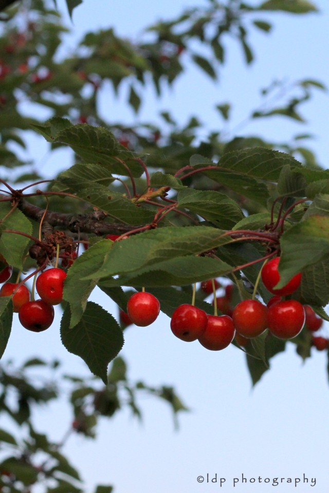 cherrytreeWM