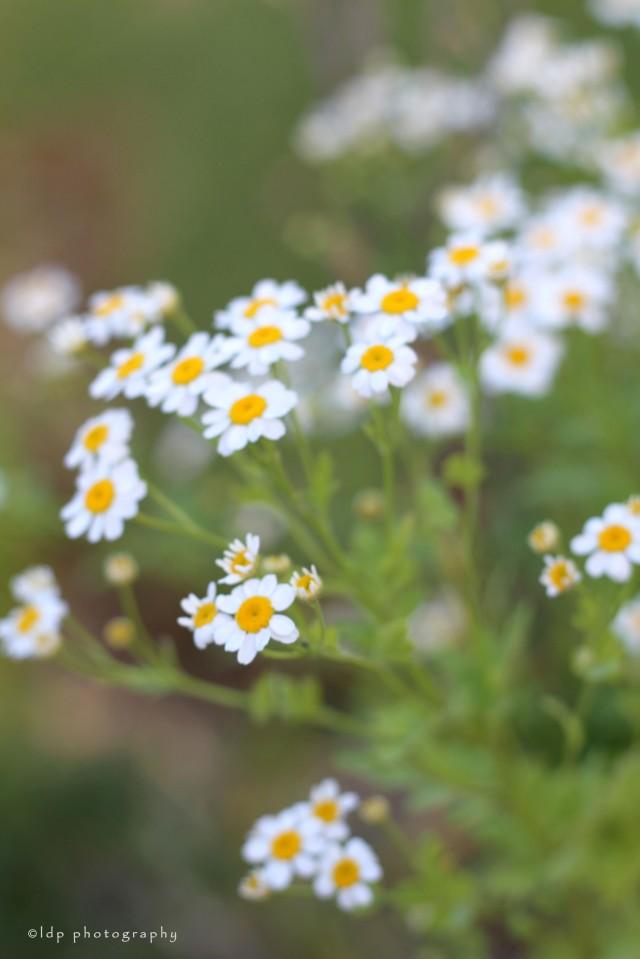 garranotinyflowers1WM