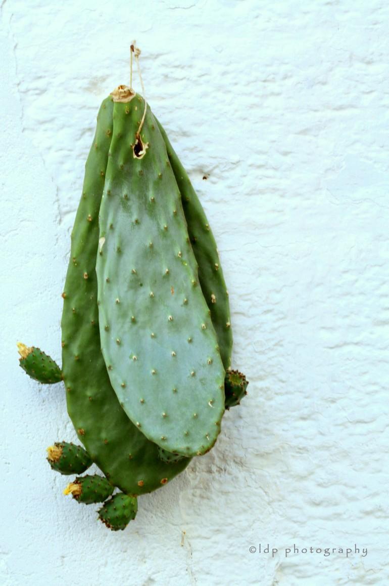 cactusleafWM