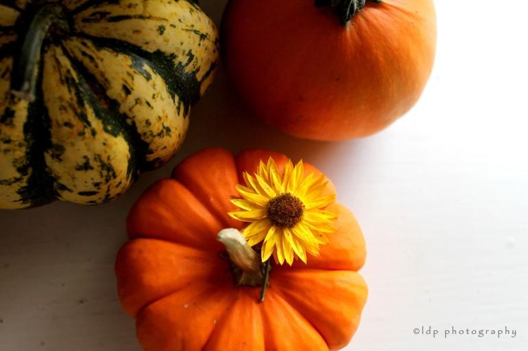 pumpkinflowerWM
