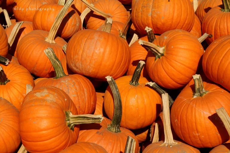 pumpkinsWM