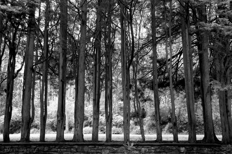 treesBWWM