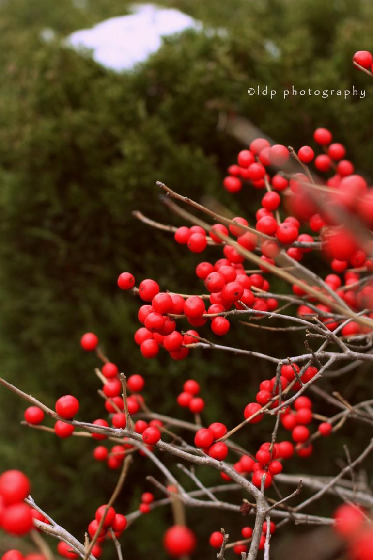 berriesWM