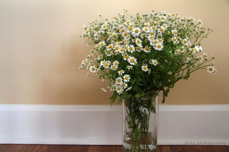 camomillaflowersWM