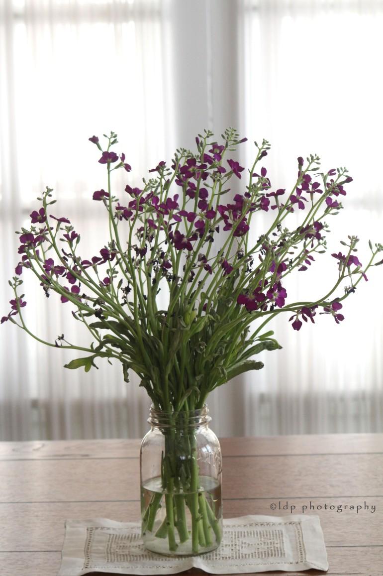 purplefillerswholeW