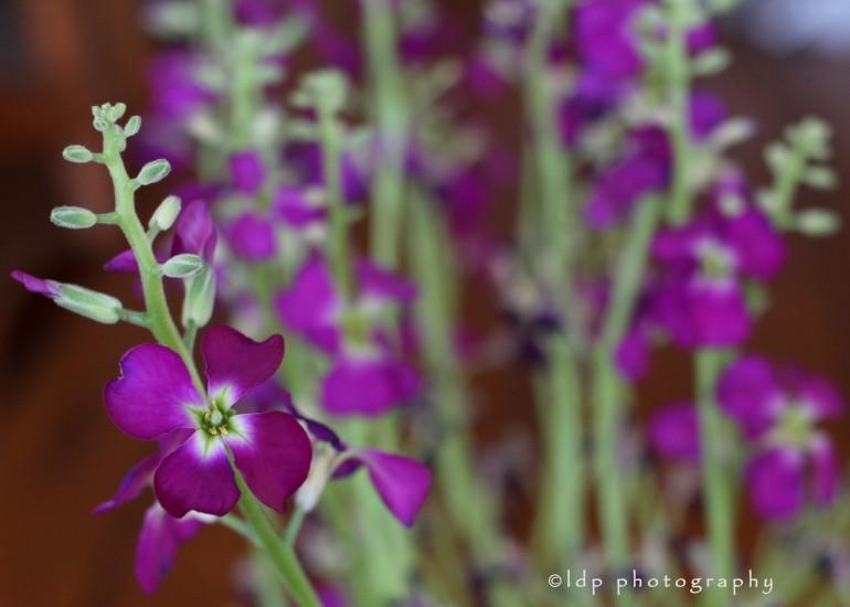 purplesflowerWM