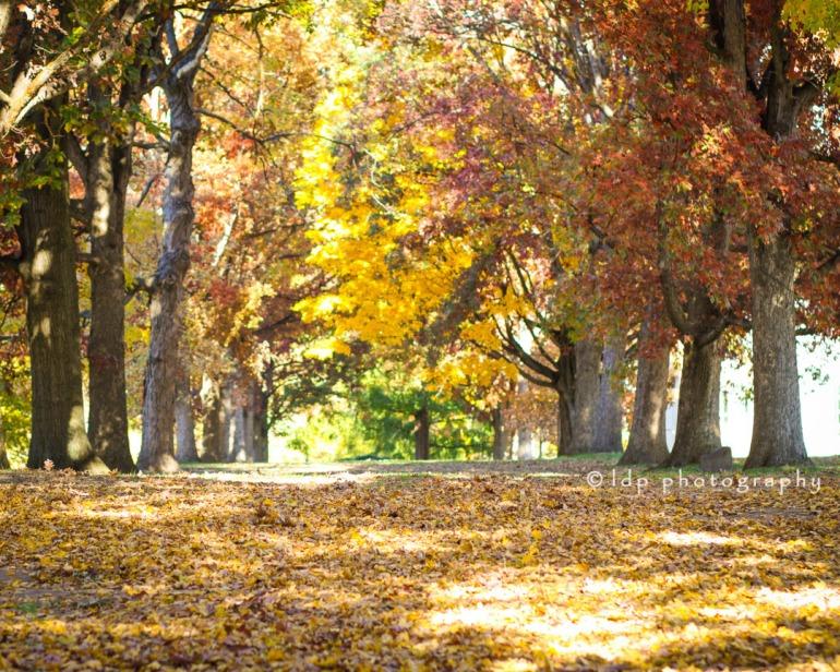 brynmawrcollegetrees1wm