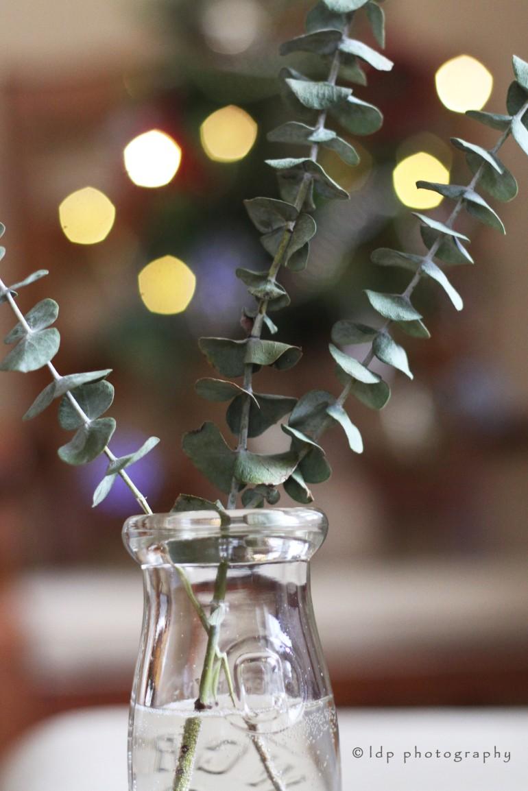 eucalyptusvert2WM