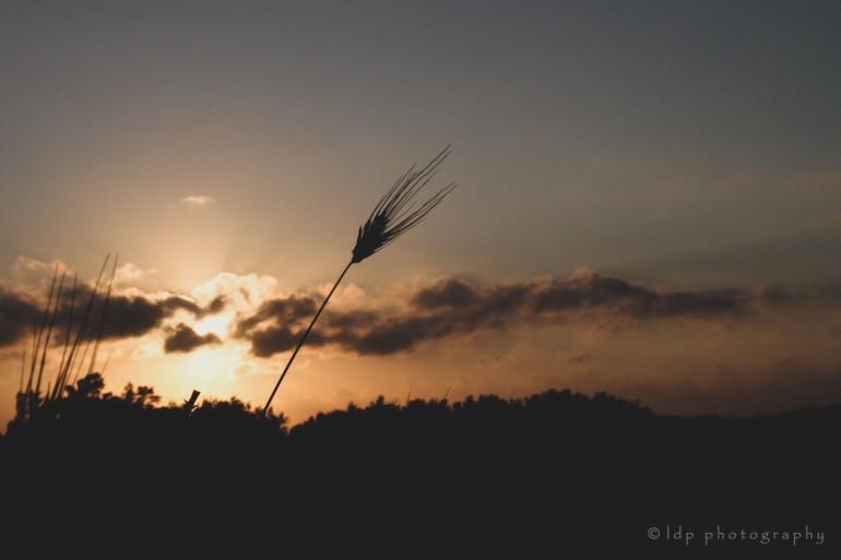 sunrisepugliaweedWMmatte