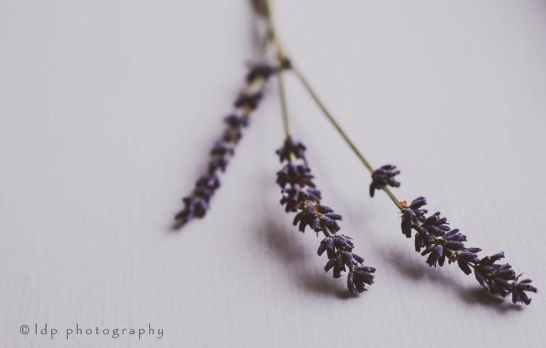 lavenderhorizontalWM