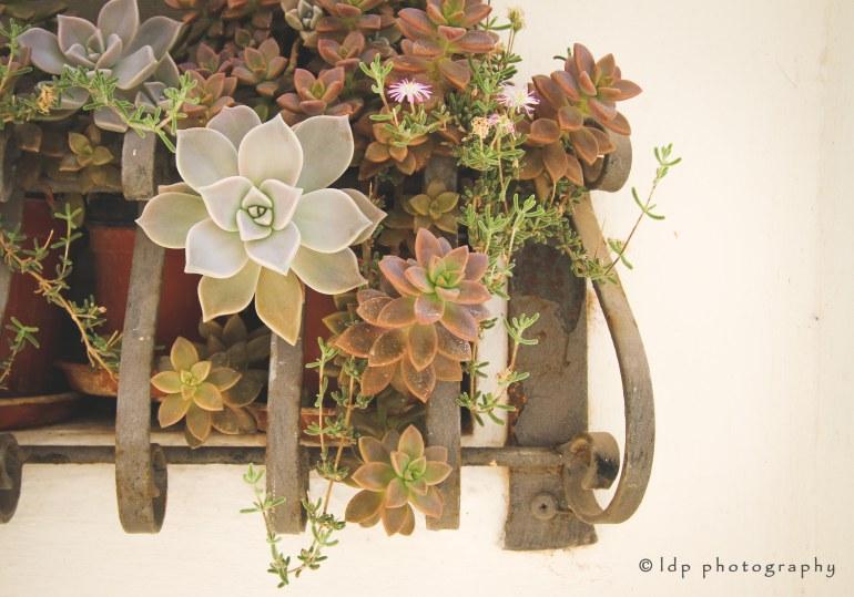locorotondosucculentsWM